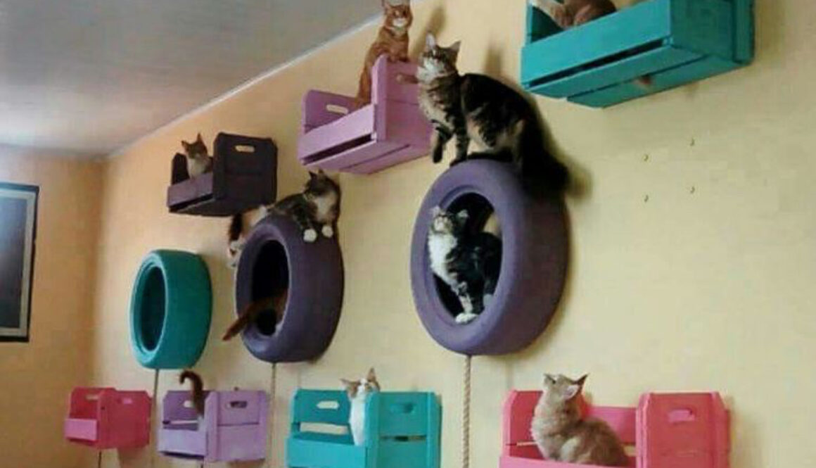 Cat houses made out of tires