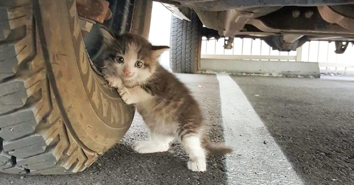 cat in truck